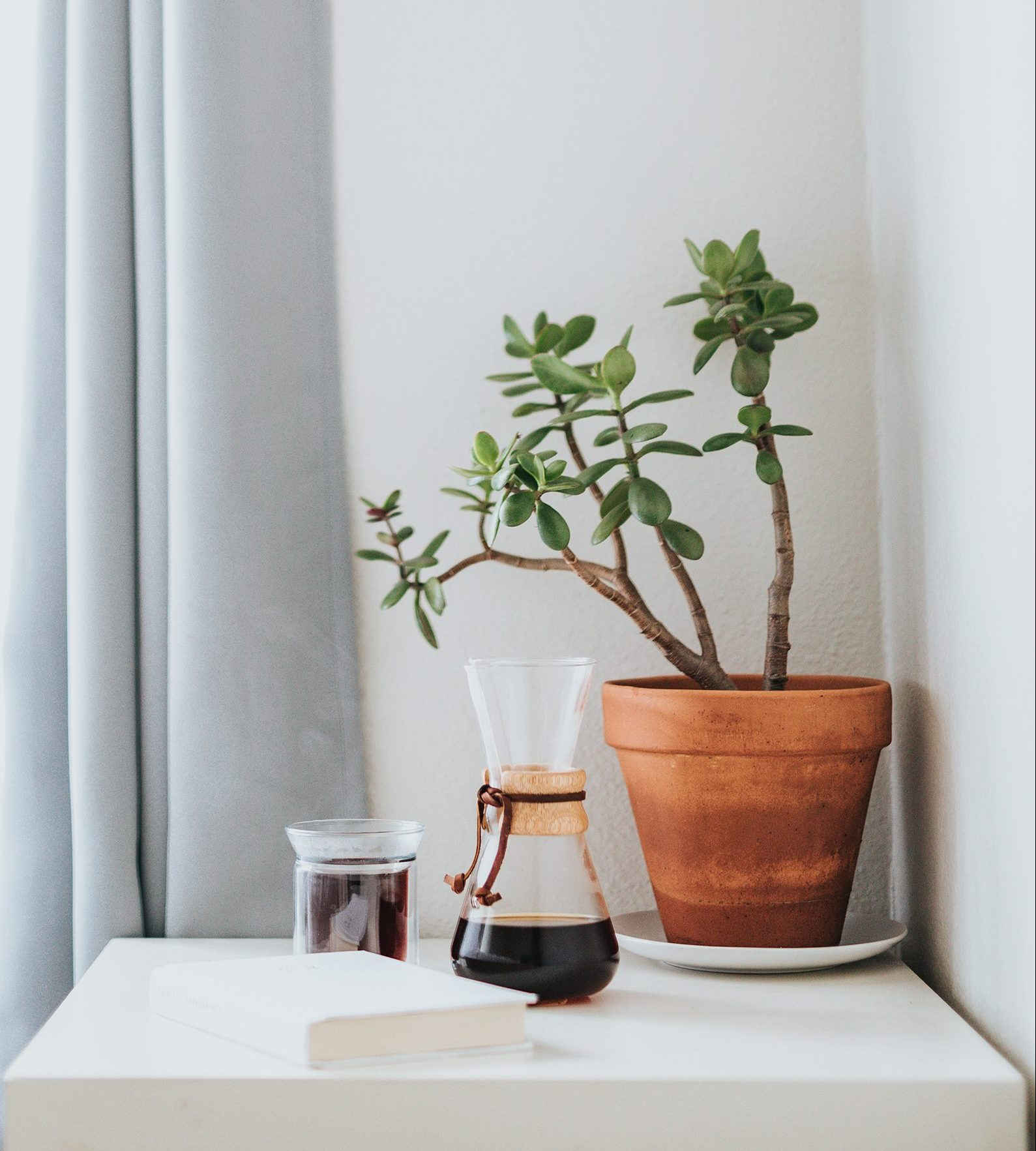 Coffee and plant