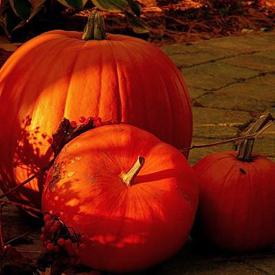 Bellevue Halloween Activities